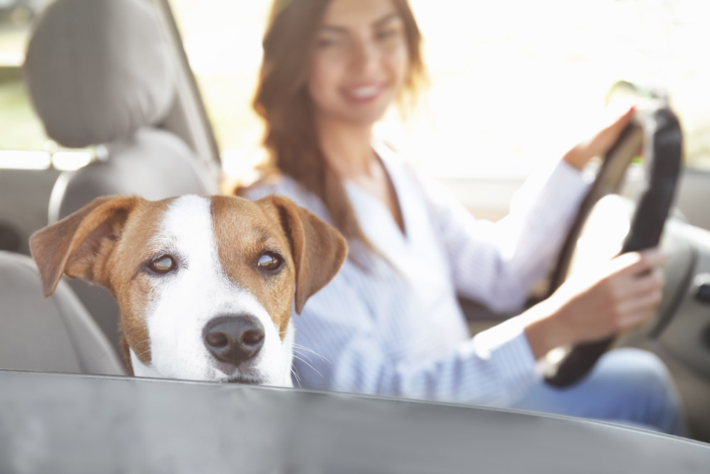 The Best Ways to Move with Pets to Make Your Life Less Stressful