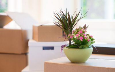 The Easy Way To Move Plants To Your New Home