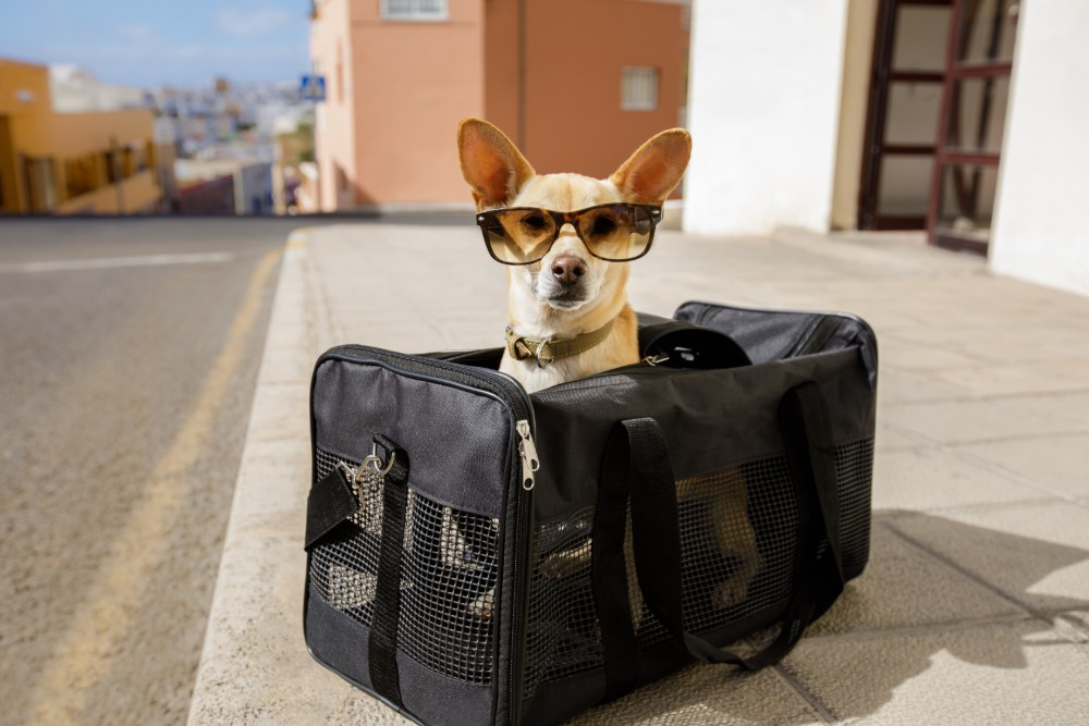 How to Safely Move Long Distance with Your Furry Friend